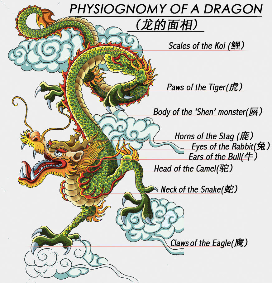 Diagram Of Asian Dragon - Information Of Wiring Diagram •